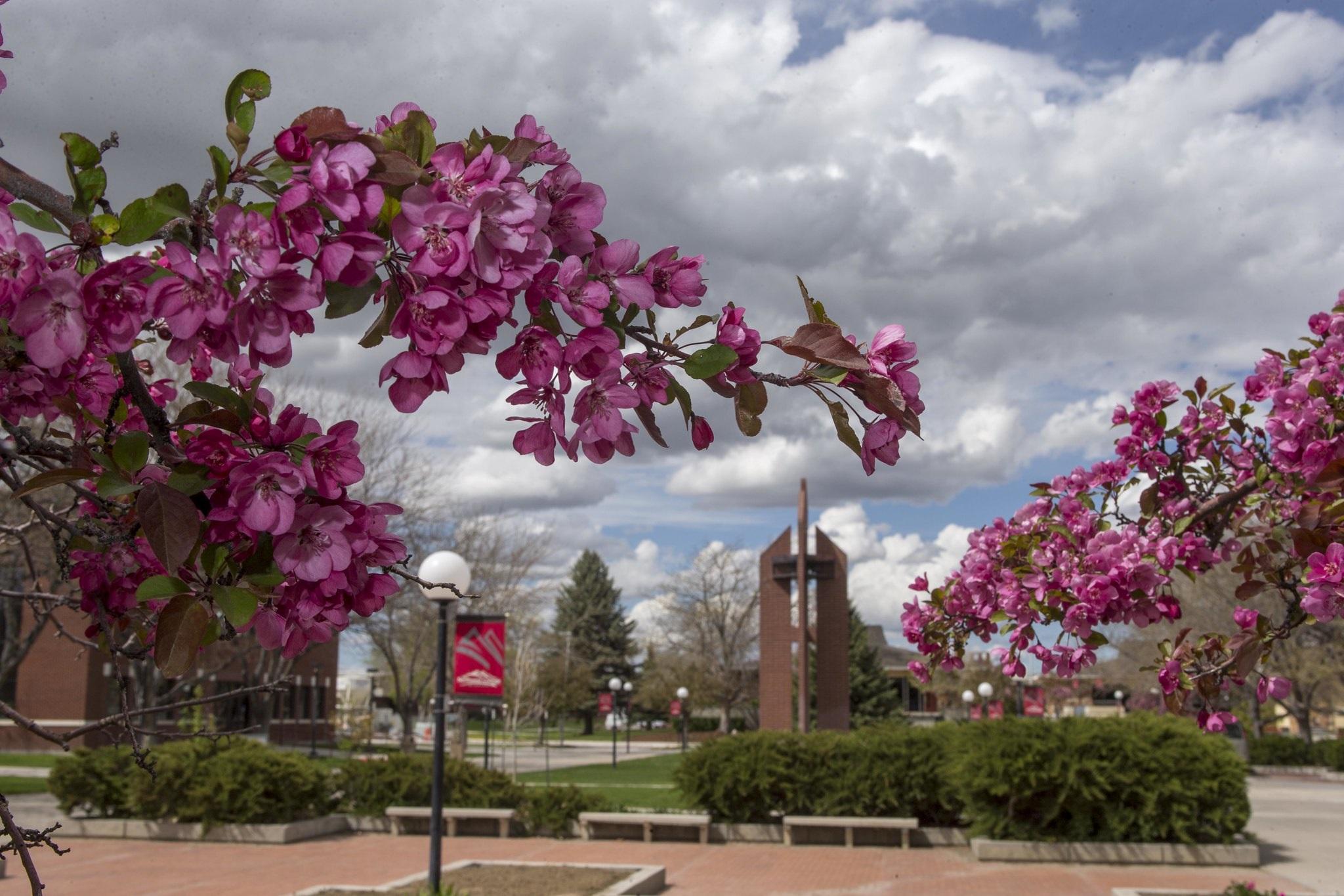 elm-pg-billboard-form Cherry blossoms large